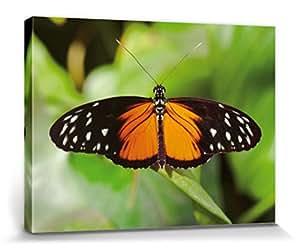 Papillons Poster Reproduction Sur Toile, Tendue Sur Châssis - Heliconius Hecalé (80 x 60 cm)
