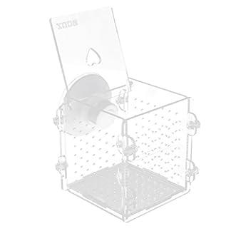 B Blesiya Acrylic Self-floating Fish Fry Breeding Box Hatchery Isolation Incubator Divider Tank for Aquarium Equipment B Blesiya Acrylic Self-floating Fish Fry Breeding Box Hatchery Isolation Incubator Divider Tank for Aquarium Equipment 41CR01A2dIL