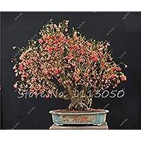 vista mezclado: Rare Wax Seed Heirloom Sweet Semente De Frutas Tropicais, plantas ornamentales de Bonsai al aire libre pueden comestibles 20 piezas en venta