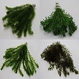100 Unterwasserpflanzen = 16 schöne kräftige Bunde Teich-Sortiment, Sauerstoffpflanzen-Set