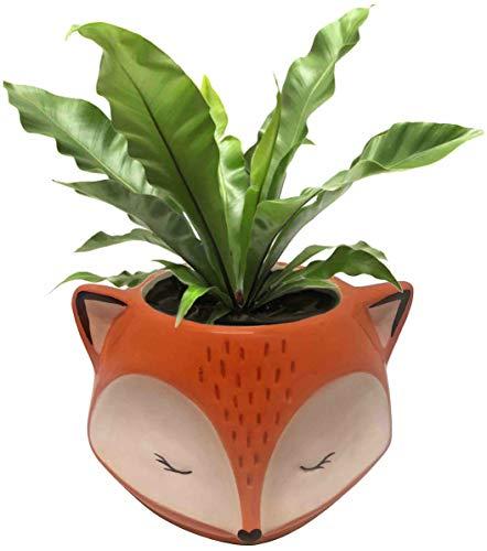 Streamline Blumentopf aus Keramik, Fuchs-Design (Blumentopf Katze)