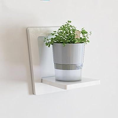 LRZLZY Wand-Blumenregal Leiste Wohnzimmer Schlafzimmer Wandrahmen Balkon Wand grünen Blumentopf Topf Rack von LRZLZY bei Gartenmöbel von Du und Dein Garten