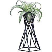 A Beautiful Garden Un hermoso soporte para plantas de aire de jardín, soporte para plantas de aire, contenedor de plantas de Tillandsia, soporte de Tillandsia para decoración del hogar, negro