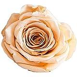ETERNAL ROSES XL Rosenkopf, konserviert, Farbe Apricot