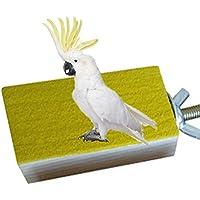 Plataforma de madera para jaula de pájaros, percha para cotorros, periquitos, cacatúas y