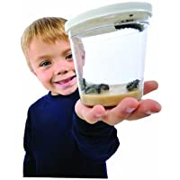 Cup of Caterpillars (LIVE CATERPILLARS! No voucher to redeem!)