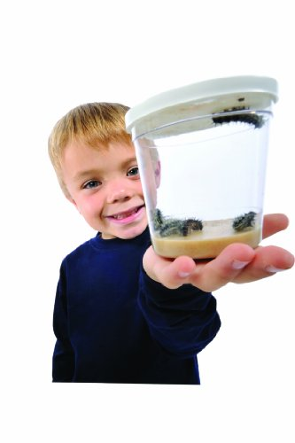 cup-of-caterpillars-live-caterpillars-no-voucher-to-redeem