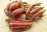 prime vista 15: Mini Zwiebel Samen Heirloom Non-GMO Gemüse Samen Seltene Bonsai Pflanze DIY Hausgarten Haushalt Küche Gewürz Lebensmittel 50 Stücke 15