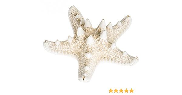 NaDeco Seestern Rufa ca 10-15cm Pentaster obtusatus Großer Deko Seestern Seeste