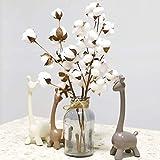 Hunpta Tige de fleur artificielle en coton séché naturellement, style rustique, pour décoration d'intérieur blanc