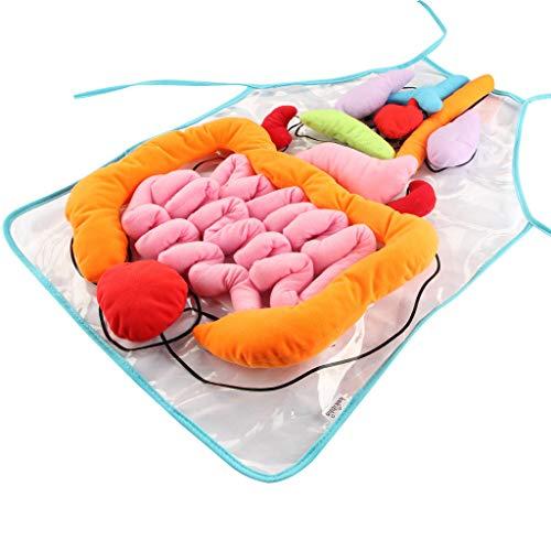 Cueyu Organes - Delantal de cuerpo humano con cuerpo de peluche 3D para niños,...