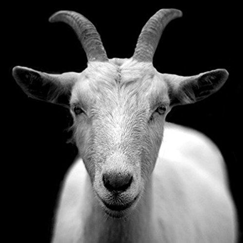 Year of the Goat [Explicit]