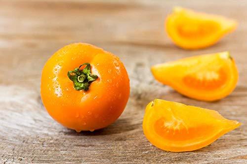 PLAT FIRM 216 mg Bio-Orange Banana Pate Tomatensamen ~ uperior Auce Tomate Non GMO