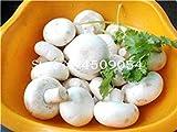 Potseed . 200 Pezzi Delicious Champignon Verde Verdura Organico Sano vegetali commestibili delle Piante in Giardino e Interna: 2