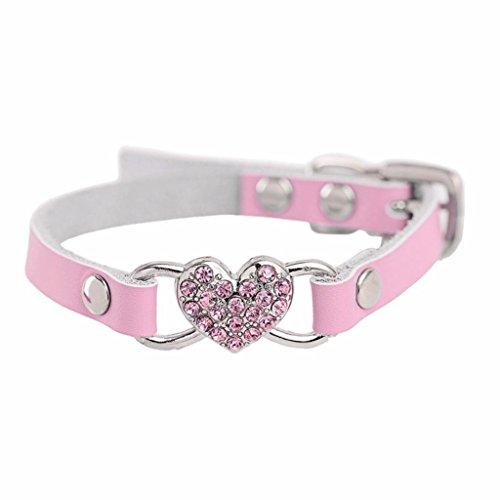 graviertem Namensschild D-Ring F/ür kleine und mittelgro/ße Hunde geeignet. weiches Leder Didog Hundehalsband mit personalisierbarem gepolstertes