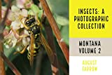 Insects & Arachnids: A Photographic Collection: Montana: United States - Volume 2 (Arthropods of Montana) (English Edition)