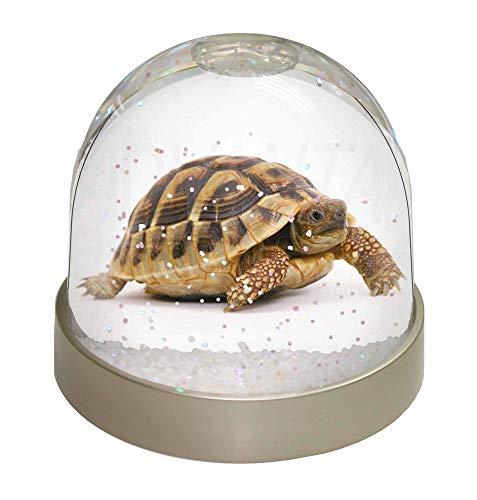 Advanta eine niedliche Schildkröte Foto Snow Globe Schneekugel Strumpffüller Geschenk, Mehrfarbig, 9,2x 9,2x 8cm
