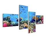 islandburner Bild Bilder auf Leinwand Aquarium Fische Meerwasser Tropische Doktorfische 4L XXL Poster Leinwandbild Wandbild Dekoartikel Wohnzimmer Marke