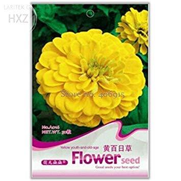 Visa Store 2018 Heißer Verkauf Schöne Gelbe Zinnia Samen, Originalverpackung, 50 Samen, Einfach zu Wachsen Lange Blütezeit Leuchten Sie Ihren Garten A016