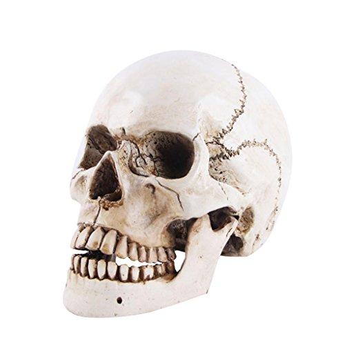 Realistische Harz Menschlichen Schädel Skelett Kopf Halloween Statue - # 1 21x13x6 ()