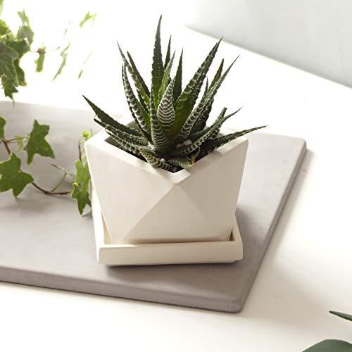 Weiß Ikosaeder-Pflanzgefäß Mit Entwässerung Und Quadratischer Untertasse