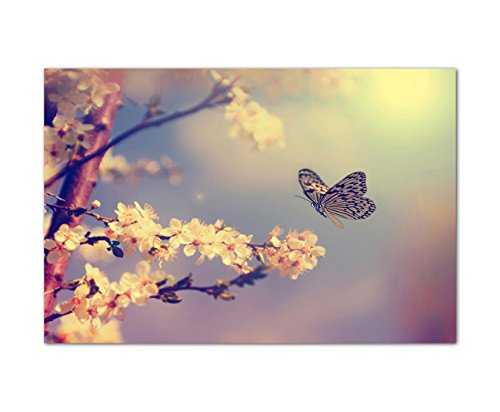 Paul Sinus Art 120x80cm - WANDBILD Kirschblüten Schmetterling Frühling Natur - Leinwandbild auf Keilrahmen modern stilvoll - Bilder und Dekoration