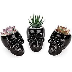 T4U (3 unidades) Para cactus, maceteros pequeños para plantas suculentas, casa y jardín
