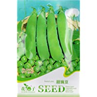Shopmeeko Guisante dulce * 1 paquete 20 & # 39; s (Pcs) * Lathyrus odoratus * LathyrusodoratusL * Verdura Samen: 1 paquete