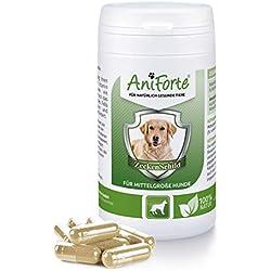 Pastillas AntiGarrapatas para Perros Medianos (10-35 kg) - 60 cápsulas   Producto 100% Natural   Complejo de Vitamina B que Actúa como Escudo Anti Garrapatas