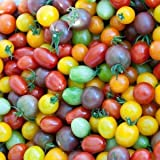 Kirschtomaten 20 Samen 'Regenbogen-Mix' Cherry-Tomate -Alle Farben in einem Paket, klein, aromatisch...