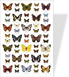 Butterfly Educational Poster - 53 European Butterfly images