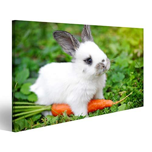 islandburner Bild auf Acrylglas Weißes Kaninchen des lustigen Babys mit Einer Karotte im Gras Wandbild Acrylglasbild Glasbild UDM