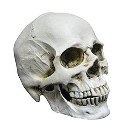 Totenkopf Menschlichen Schädel Head Small Life Size Realistische Replik Harzproduktion Schädel, Anatomischen Medizinischen Lehre Wohnzimmer Sammlung Halloween Dekoration Totenschädel.