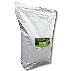 Lawn Seed Lawn Universal 10 Kg Meadow Grass Seed Shadow Game Sports Sunbathing