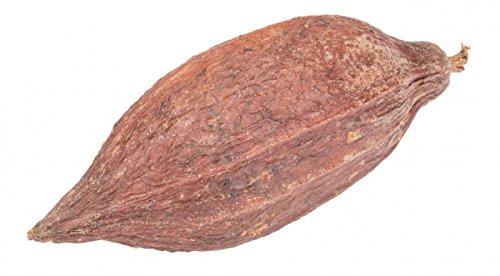 NaDeco Kakao Schote mit Bohnen Kakaoschote Kakaofrucht Kakaobohne getrocknete Kakao Frucht mit Bohnen
