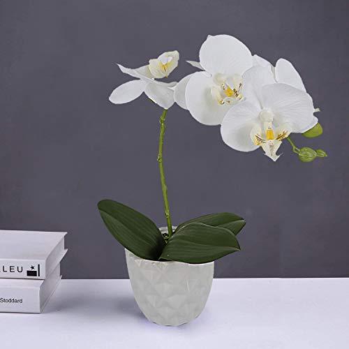 LIVILAN Künstliches Blumenarrangement Phalaenopsis Orchidee Seidenblume mit dekorativer Keramikvase in Weiß (Vasen Weiße In Bulk)