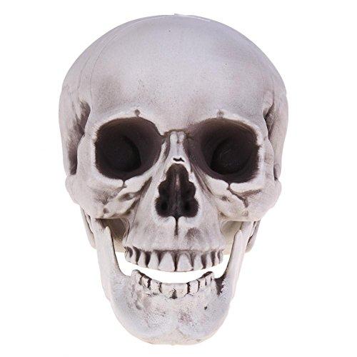 YouN Cabeza de calavera humana modelo Halloween Horror...
