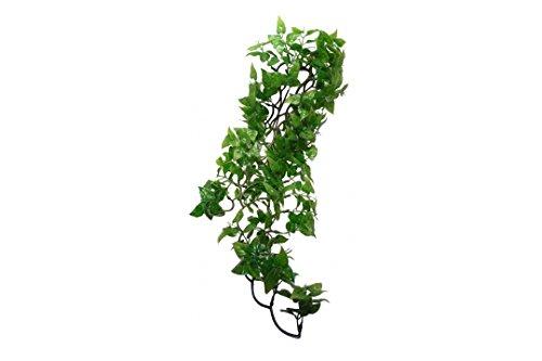 Komodo-Philodendron-Plant