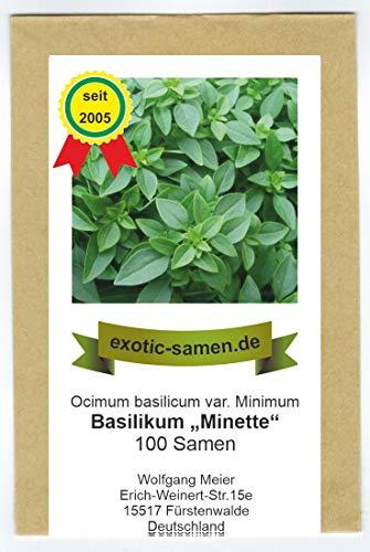 Ocimum minimum - griechisches, kleinblättriges Basilikum - 100+ Samen