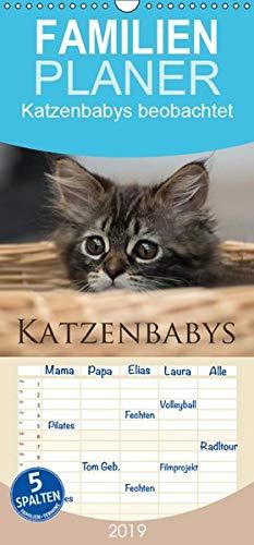 Katzenbabys beobachtet - Familienplaner hoch (Wandkalender 2019 , 21 cm x 45 cm, hoch): Dreizehn zauberhafte Bilder der süßen Katzenbabys. Mit der ... (Monatskalender, 14 Seiten ) (CALVENDO Tiere)