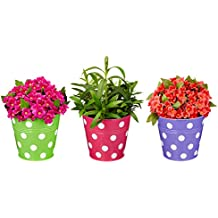 Solimo Corrosion Resistant Hanging Planter - Set of 3 (Round - Green, Pink, Purple)