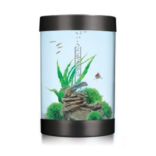 biUbe 35 Liter Komplett-Aquarium mit Halogen Lichteinheit – Schwarz - Blaustich