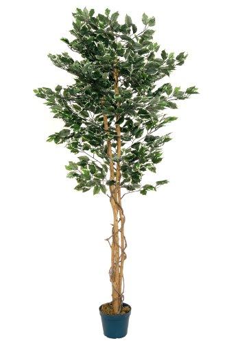 McPalms Ficus grün/weiß 1,80 m künstlich Kunstbaum Kunstpflanze Echtholzstamm