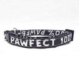 Katzenhalsband – 100% Pawfect