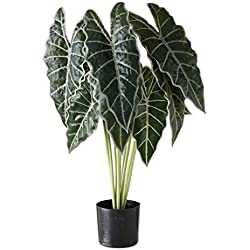 Home Collection Kunstpflanze Grünpflanze Alokasie im Topf H71cm