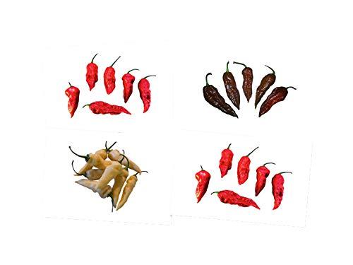 Bhut Jolokia Chili Sortiment (3 Sorten) 1.000.000 Scoville Extrem Scharf