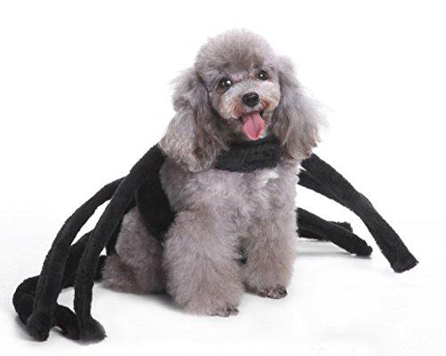 Kostüm Scream Scary - Midlee Black Widow Spider Hund Kostüm, Medium