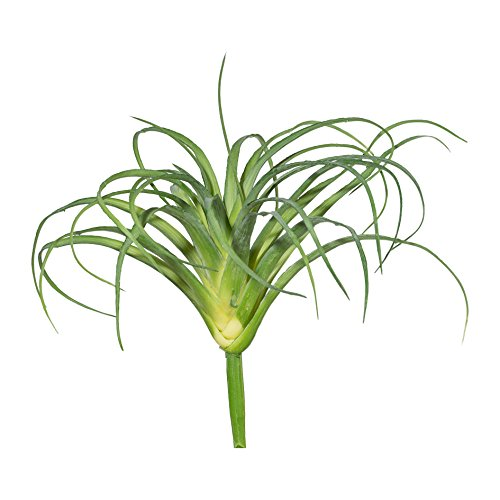 Kunstpflanze TILLANDSIE, Tillandsien, Tilansie, Tillancie 15cm