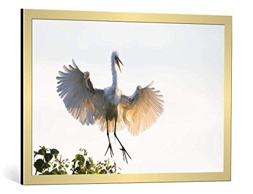 kunst für alle Bild mit Bilder-Rahmen: Phillip Chang Golden Wings - dekorativer Kunstdruck, hochwertig gerahmt, 90x60 cm, Gold gebürstet