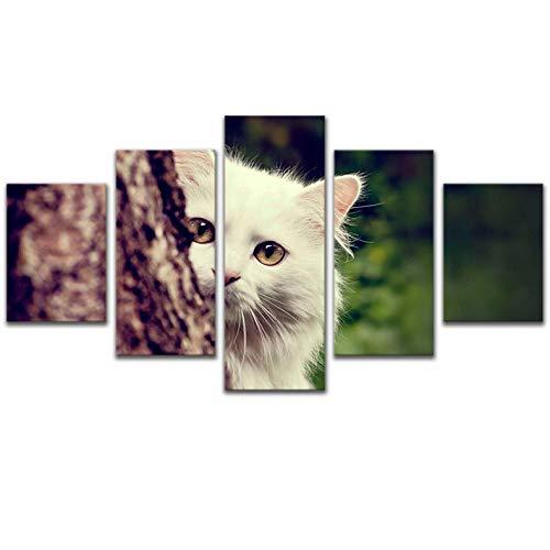 (zhenfa Katzenaugen fünf verknüpft Haustier Katze Wandbild rahmenlose 5 Kombination hängen Gemälde (können, doppelseitigem Kleber, wie z.B. Feste oder Bild Rahmen straffe Federung))